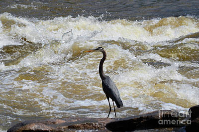 Photograph - Lunch In The James River 2 by Afroditi Katsikis