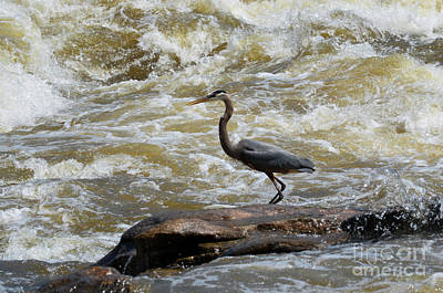 Photograph - Lunch In The James River 3 by Afroditi Katsikis