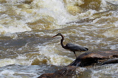 Photograph - Lunch In The James River 5 by Afroditi Katsikis