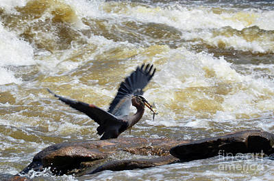 Photograph - Lunch In The James River 7 by Afroditi Katsikis