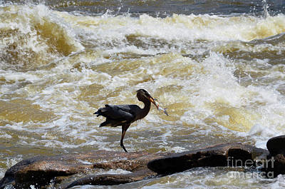 Photograph - Lunch In The James River 8 by Afroditi Katsikis