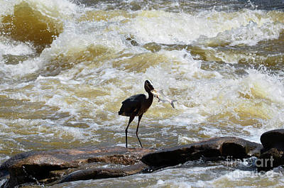 Photograph - Lunch In The James River 9 by Afroditi Katsikis