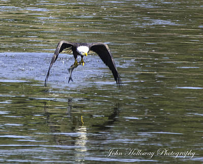 Photograph - Lunch On The Fly by John Holloway