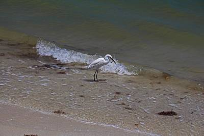 Photograph - Lunchtime On Sanibel by Michiale Schneider