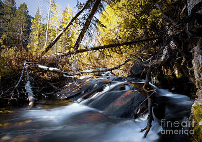 Photograph - Lundy Canyon's Flowing River by Jerome Obille