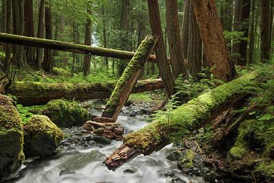 Photograph - Lupin Falls Creek by Adam Gibbs