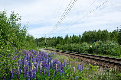 Photograph - Lupin Flowers By The Railroad by Kennerth and Birgitta Kullman
