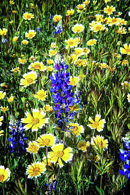 Photograph - Lupine Amidst Tidy Tips by Lynn Bauer
