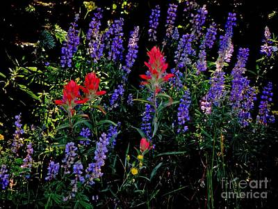 Photograph - Lupine And Indian Paintbrush by George Tuffy