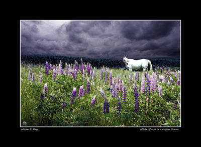 Photograph - Lupine Dreams The White Horse Poster by Wayne King