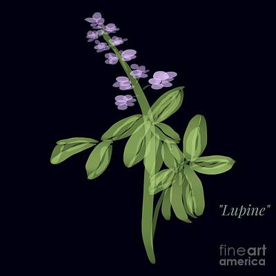 Drawing - Lupine Flower Illustration by Susan Garren