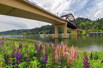 Lupine In Bloom By Sauvie Island Bridge Art Print by David Gn
