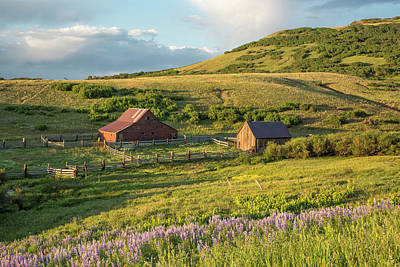 Photograph - Lupine In The Field by Denise Bush