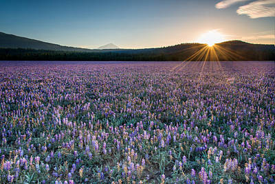 Photograph - Lupine Meadow by Leland D Howard