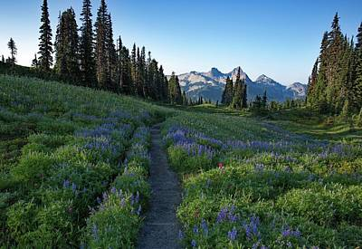 Photograph - Lupine Meadow Trail by Lynn Hopwood