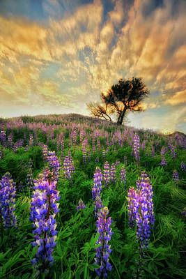 Photograph - Lupine On Lupine by Nicki Frates