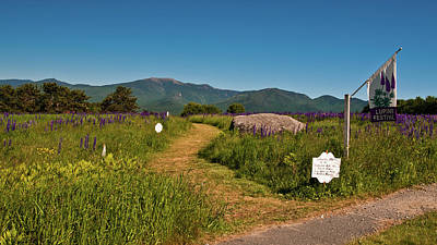 Photograph - Lupine Path To The Notch by Brenda Jacobs