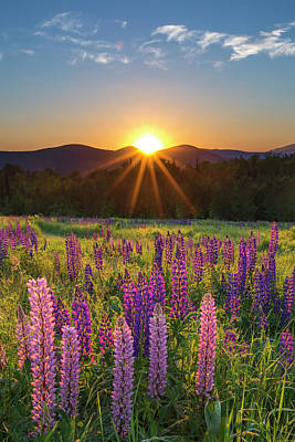 Photograph - Lupine Sunrise Sugar Hill by Chris Whiton