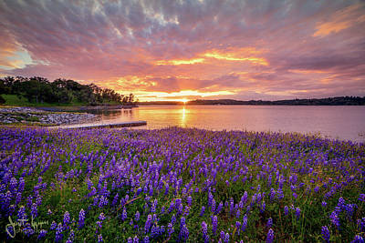 Photograph - Lupine Sunset  by Janet Kopper