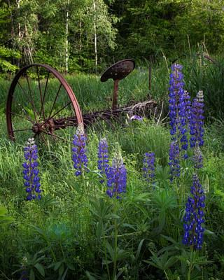 Photograph - Lupine Wheel by Darylann Leonard Photography