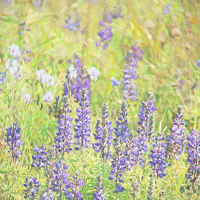 Photograph - Lupine Wildflowers Montana by Jennie Marie Schell