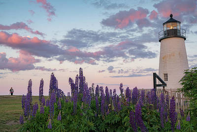 Photograph - Lupines And Lighthouse by Darylann Leonard Photography