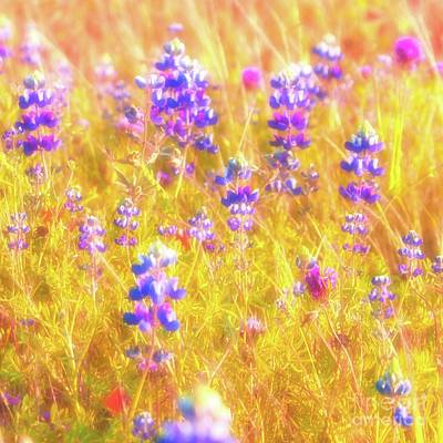 Lupines And Mixed Wildflowers Original