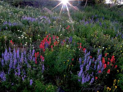 Lupines And Sun Art Print