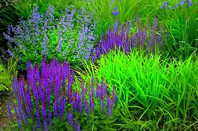 Photograph - Lupines  by Diana Angstadt