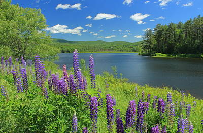 Photograph - Lupines By Pearl Lake by John Burk