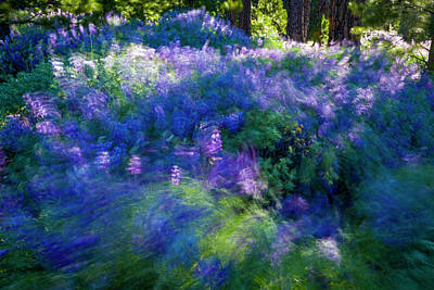 Photograph - Lupines In Motion by Joe Doherty