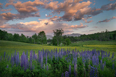 Photograph - Lupines In Sugar Hill by Betty Wiley