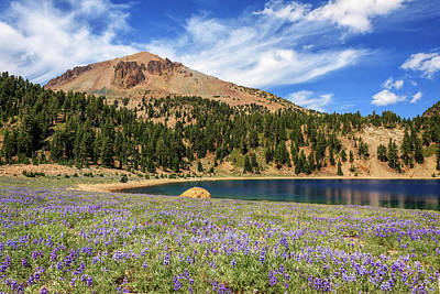 Photograph - Lupines Lake Helen And Mount Lassen by James Eddy