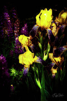 Photograph - Lupins And Irises by Jo-Anne Gazo-McKim