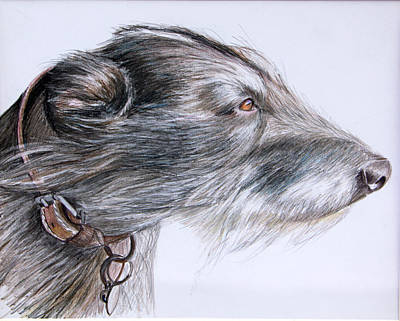 Drawing - Lurcher by Mary Mayes