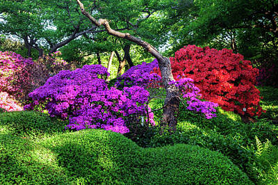 Photograph - Luscious Bloom Of Rhododendrons In Japanese Garden 1. Prague  by Jenny Rainbow