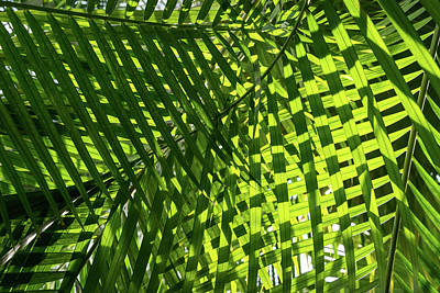 Photograph - Luscious Geometric Greenery - Sun And Shade Palm Fronds Left by Georgia Mizuleva