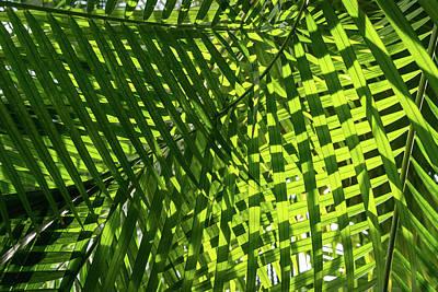 Photograph - Luscious Geometric Greenery - Sun And Shade Palm Fronds Left by Georgia Mizuleva