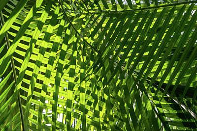 Photograph - Luscious Geometric Greenery - Sun And Shade Palm Fronds Right by Georgia Mizuleva