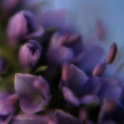 Luscious Lilac Art Print by Bonnie Bruno