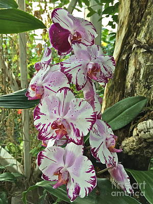 Photograph - Luscious Lovely Orchids by Barbara Plattenburg