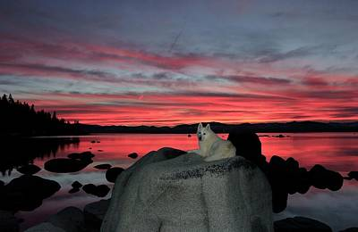 Photograph - Luscious Sunset Solitude by Sean Sarsfield