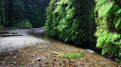 Photograph - Lush Fern Canyon by Pierre Leclerc Photography