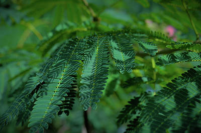 Lush Foliage Art Print