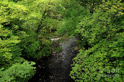 Photograph - Lush Foliage With A Winding Stream Cutting Through The Forest by DejaVu Designs
