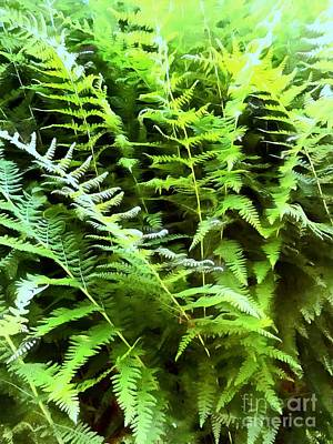 Photograph - Lush - Forest Ferns by Janine Riley