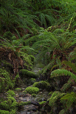Photograph - Lush Forest by Jacqui Boonstra