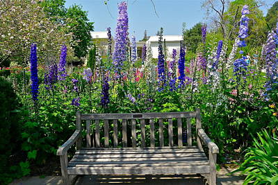 Photograph - Lush Garden Bench by Denise Mazzocco