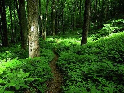 Photograph - Lush Green At In Ma by Raymond Salani III