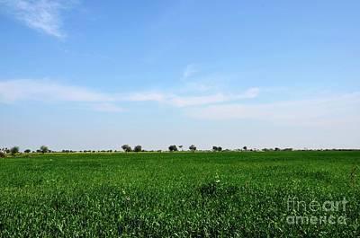 Photograph - Lush Green Farm Fields Of Rural Sindh Mirpurkhas Pakistan by Imran Ahmed